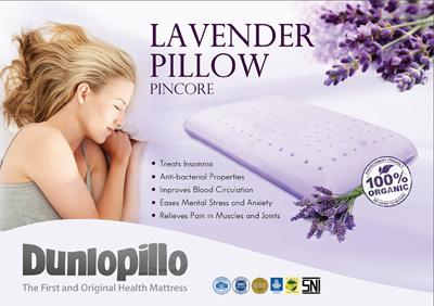 Qoo10 dunlopillo 100 natural latex lavender pincore pillow - Dunlopillo 100 latex ...