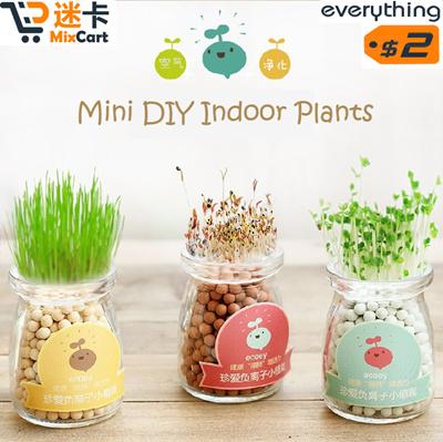 Qoo10 mini plant gift idea diy indoor plant mini for Indoor plant gift ideas