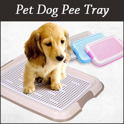 Potty-Pad Training Your Dog Animal Humane Society