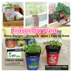 ★IMP HOUSE★ [Gift Idea][DIY Indoor Plant]Mini Indoor Plant for Home and Office Deco/Green Life/tomato/flower/blueberry