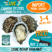 [Evergreen Seafood] Live Canada Oysters - 1 Dozen 12pcs - 3 to 4 inches big