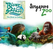 Singapore Zoo(include tram ride) + River Safari(include boat ride) Combo E-Ticket 河川生态园+动物园