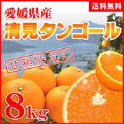 ★果汁たっぷりペロリ!大豊作祝い清見タンゴール8kg(約30-50玉)【送料無料】訳あり・ご自宅用 ★別名清見オレンジ。万人受けする甘さで温州みかんのなくなる春先から初夏まで楽しめる柑橘です