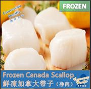 [CAUSEWAY PACIFIC] Premium Canada Scallop/ 500g /CHEAPER THAN WHOLE SALE PRICE / LIMITED QUANTITY !!