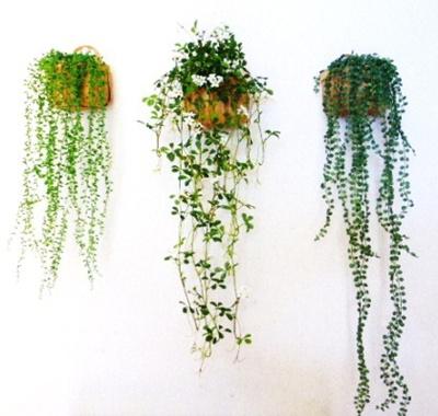 ●代引き不可送料無料観葉植物造花の画像