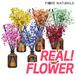 Fiorena Real Flower Diffuser★Made in KOREA★Preserved Diffuser/Home Interior/Flower scent/Refill