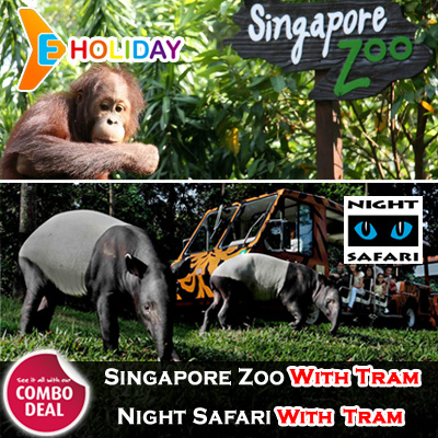 [ E-Holiday ] Singapore Zoo with Tram Deals for only S$83 instead of S$0