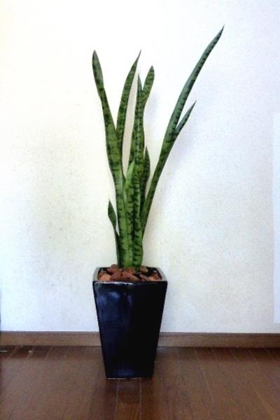 ●代引き不可送料無料サンセベリア人工観葉植物 造花の画像