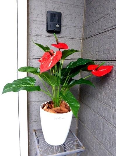 ●代引き不可送料無料アンソリューム人工観葉植物 造花の画像