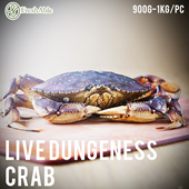 Live Dungeness Crab 900g-1kg