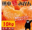 【送料無料】大容量10kg!! 温暖なミカンの本場、熊本からコクのある甘~いミカンを、大容量10kgでお届けします!! 10kg箱を送りしますので、家族様でのシェアや、御家族の多いお客様におススメ
