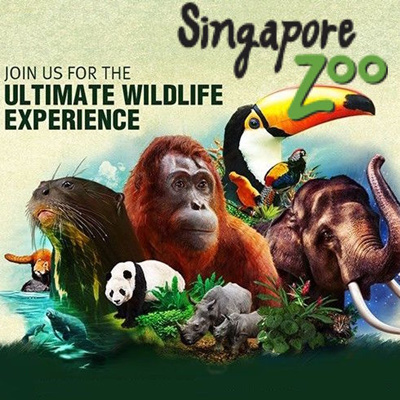 Zoo Deals: 50 to 90% off deals in Zoo. Get daily deals and local insights. Visit for Two or Four to The Reptile Zoo (Up to 25% Off). Cheetah Photo Group Encounters at Wildlife Safari (Up to 59% Off). Six Options Available.. One or Two Adult or Children's Tickets to Wildlife Safari (Up to 40% Off).