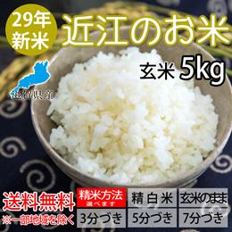【送料無料※北海道・沖縄を除く】27年産近江のお米(滋賀県産10割) 5Kg玄米 【精米方法が選べます】