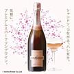 ◆オーストラリア史上最高のスパークリングワイン!! シャルドネとピノ ノワールから造られるシャンドン ロゼは、伝統的な瓶内二次発酵と18ヶ月の熟成によって生まれるクリーミーな質感と、赤いペリー系のフレッシュな果実味が特徴です。 シャンドン ブリュット 【ロゼ】 NV 750ml NEWラベル【複数購入でも送料430】