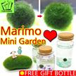 [LOVE GIFT] MARIMO MINI AQUARIUM / Good Luck / KOREA Best Gift / Made Japan /garden