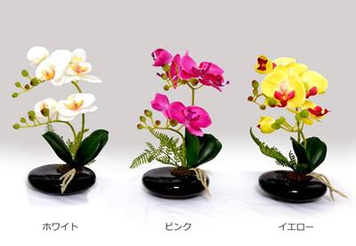 光触媒卓上型胡蝶蘭奏(かなで)ホワイト・ピンク・イエロー〔3色各1鉢セット〕