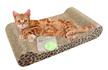 猫用爪とぎベッド ソファ つめとぎマット Y字型 猫が爪とぎしたくなる