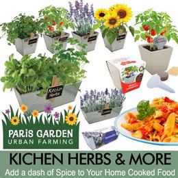 Paris Garden Plants-Galvanized Pots / Windowsill Kits...Organic Lavender/Tomatoes/Sunflower/Kitchen