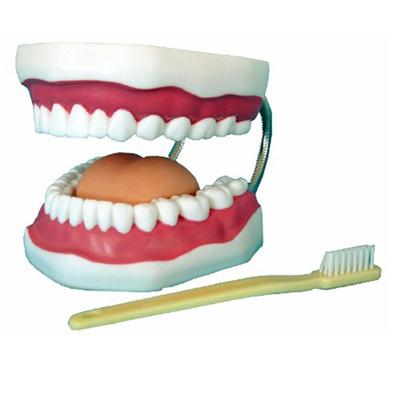 七色花幼教幼儿园小学科学探索玩具教具牙齿保健护理