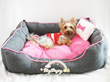 [FREE Portable Bowl ★ Restocked] Imported Design Pet Dog Cat Plush Reversible Cushion Bed