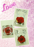 Great Valentine Gift!! Preserved Real Rose! Selling at Discounted Price $25(Usual $49.90)For Only 7 Days!
