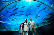 **SEA Aquarium Ticket