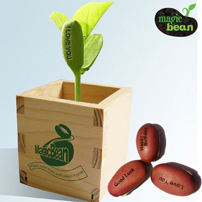 NEW ARRIVAL MAGIC BEAN WOODEN GIFT BOX