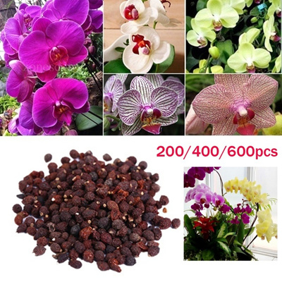 Qoo10 - 200 400 600pcs Mixed Packed Phalaenopsis Orchid Seeds Bonsai Plants  Fl...   Leisure   Travel 630354c11833