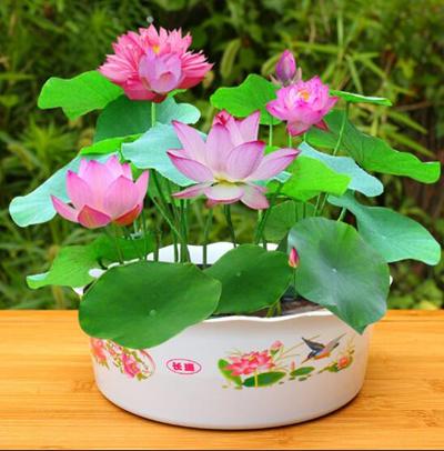 Ảnh hoa sen - Bộ sưu tập hình ảnh hoa sen đẹp và ý nghĩa của hoa sen