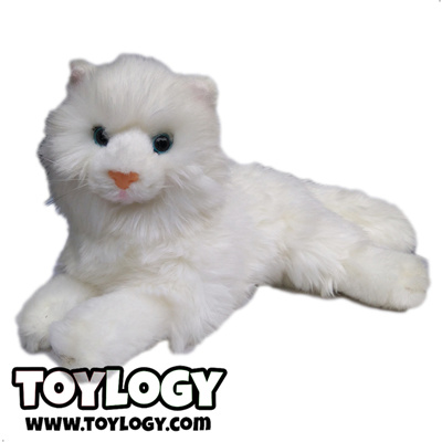 Unduh 87+  Gambar Kucing Anggora Putih Paling Imut Gratis