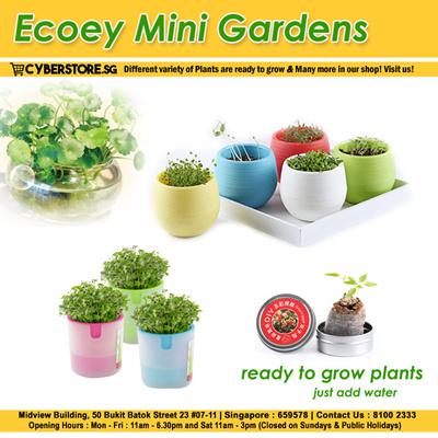 Ecoey Air Plant 小花农 Mini Garden Xiao Hua Nong Magic Garden Canned Plant  Indoor Gardening 16576d45f9
