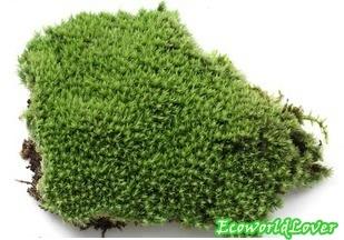 Qoo10 Live Cushion Moss Tools Gardening