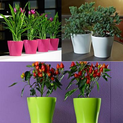 Qoo10 & Euro3plast[Synue Pot] - Classic Flower Pot★Plastic pots★designer planters★Indoor/Outdoor Flowers Pot