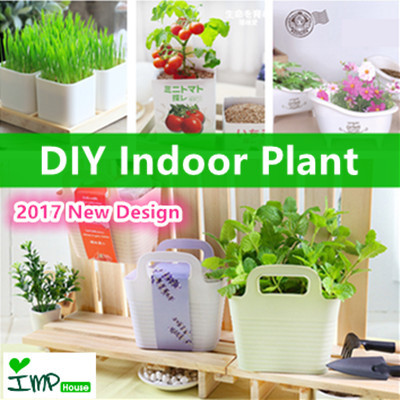 qoo10 imp house gift idea diy indoor plant mini