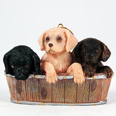 Qoo10 Labrador Retriever Puppies In A
