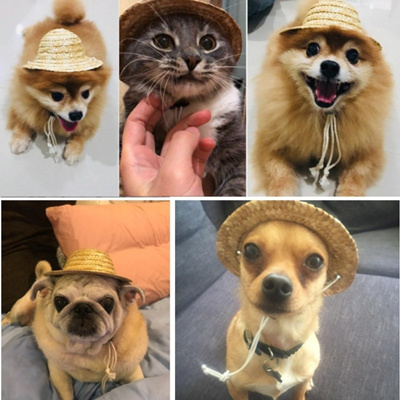 Qoo10 Lovely Cat Dog Sun Hat Cap Sun Protection Pet Hat Pos Props