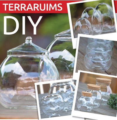 Qoo10 Diy Terrariums Small Tools Gardening