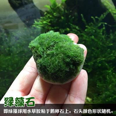 Marimo Moss Balls Live Aquarium Plant Algae Fish Shrimp Tank Ornament Green  algae ball landscaping a
