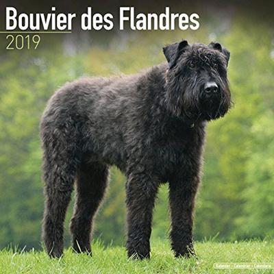 Qoo10 - MegaCalendars Bouvier Des Flandres Calendar 2019