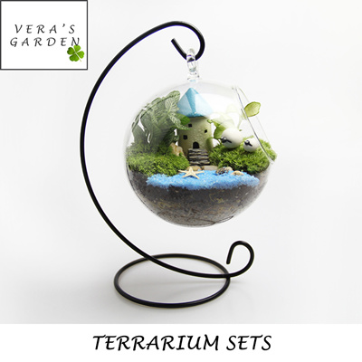 DIY Terrarium Package Sets Fittonia Plants House Warming Gifts