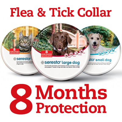 Qoo10 Bayer Seresto Collar Pet Care