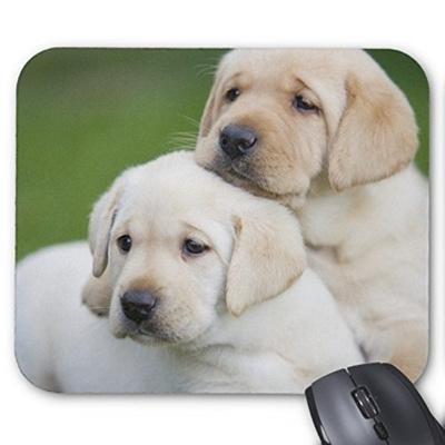 qoo10 yellow labrador retriever puppies have fun mouse pad animals