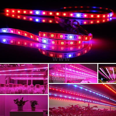 Waterproof LED Greenhouse Light 0 5M 3PCS LED Plant Growth Strip Light  SMD5050 Red Blue Growing Lam