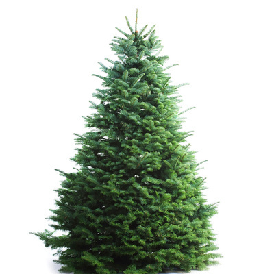 Christmas Tree Setup.5ft Live Decorated Christmas Tree Noble Fir Imported Us Premium Free Delivery Setup And Dismantle