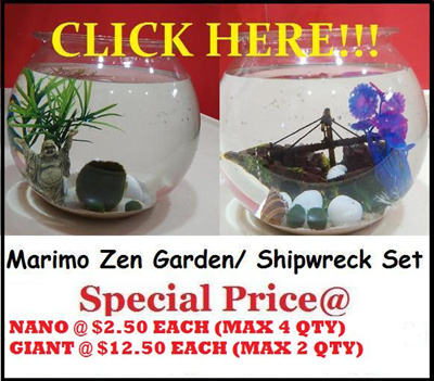 Qoo10 Marimo Kit Pet Care