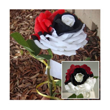 Amazing ! 100pcs Red White Black Rose Flower Seeds Mystic Flower Seed Perennial Garden Balcony