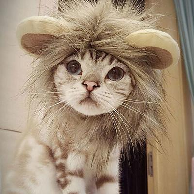 59193941b New Pet Cat Dog Dress Up Costume Wig Emulation Lion Hair Mane Ears Head Cap  Autumn
