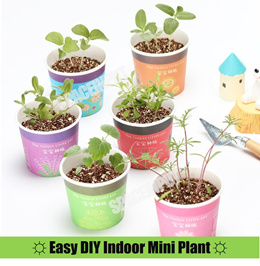 ★DIY Plant★Mini Indoor Plant★Best for Home and Office Deco★