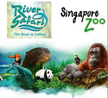 Singapore Zoo(include tram ride) + River Safari(include boat ride) Combo E-Ticket 河川生态园+动物园