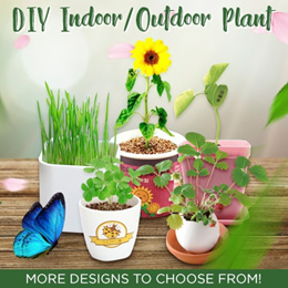 ★IMP HOUSE★ READY STOCK Christmas Gift DIY Mini Indoor Plant for Home and Office Deco Green Life